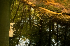 Nature_15